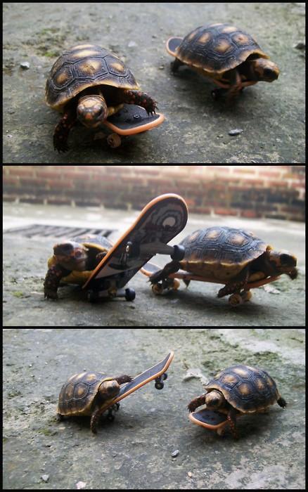 Turtle Skate Crew